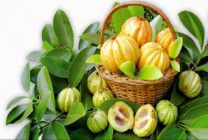 Garcinia fruits